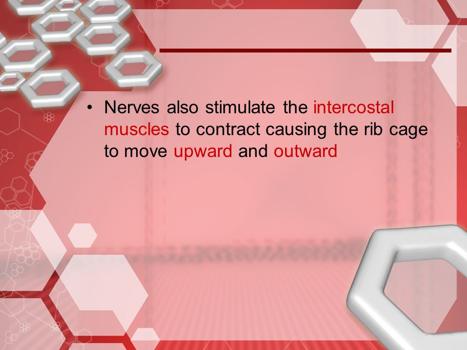 Nerves also stimulate the intercostal muscles to contract causing the rib cage to move upward and outward
