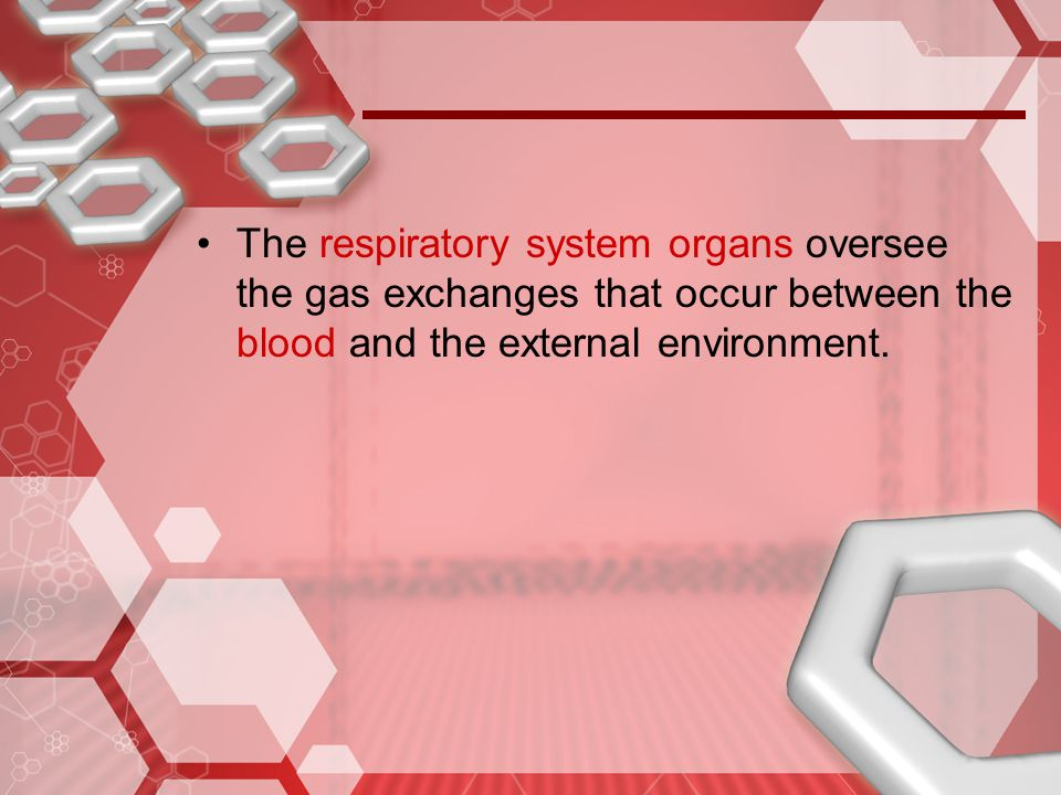 The respiratory system organs oversee the gas exchanges that occur between the blood and the external environment.