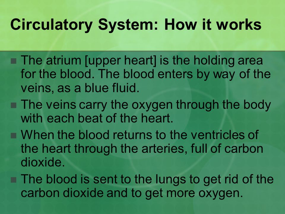 Circulatory System: How it works
