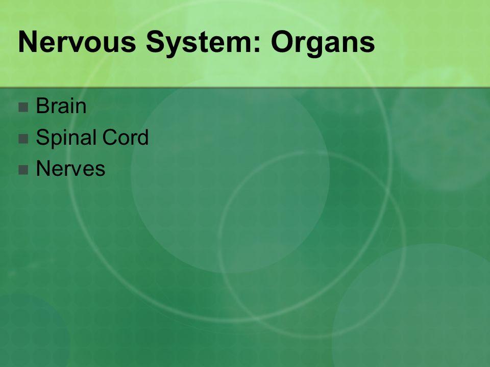 Nervous System: Organs