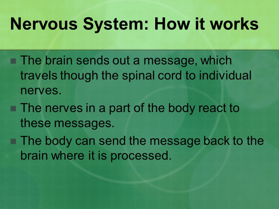 Nervous System: How it works