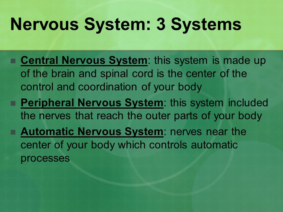 Nervous System: 3 Systems