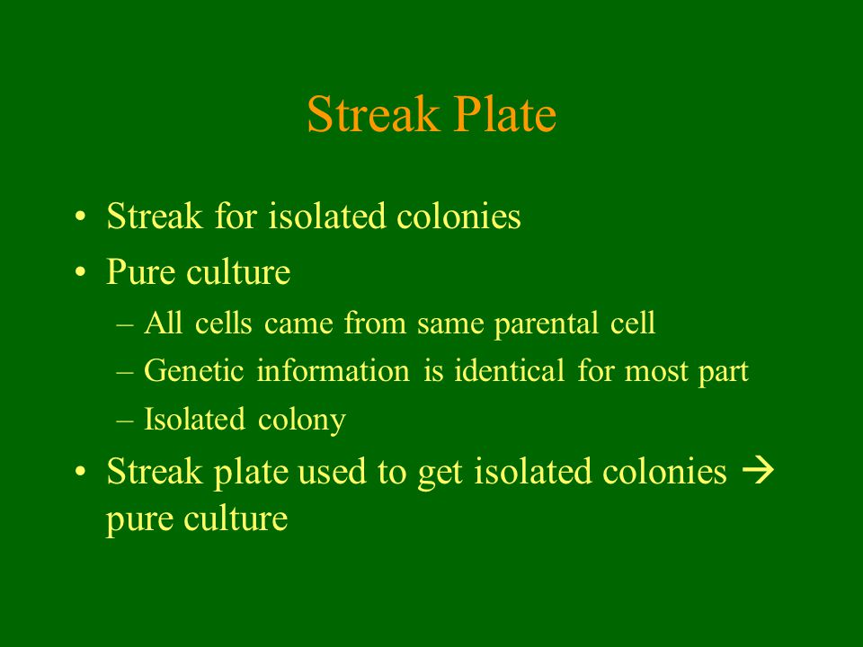 Streak Plate Streak for isolated colonies Pure culture