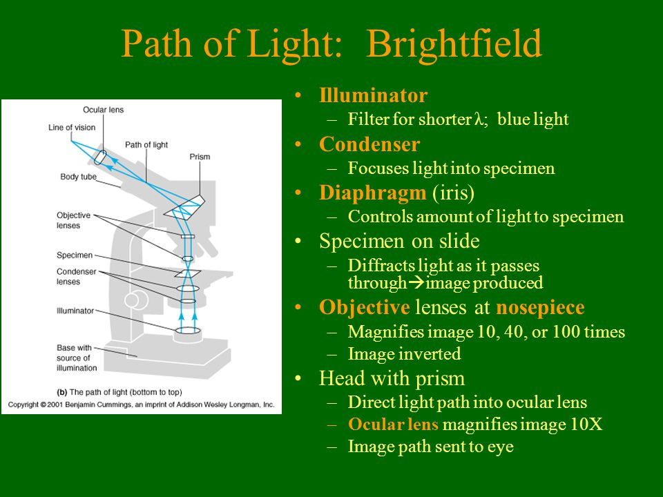 Path of Light: Brightfield