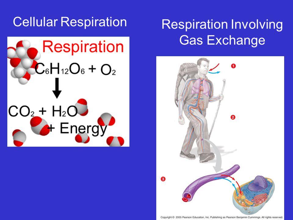 Respiration Involving Gas Exchange