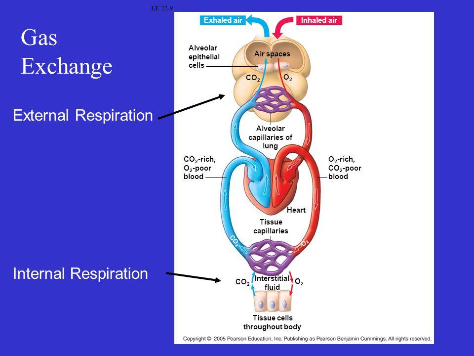 Gas Exchange External Respiration Internal Respiration Exhaled air
