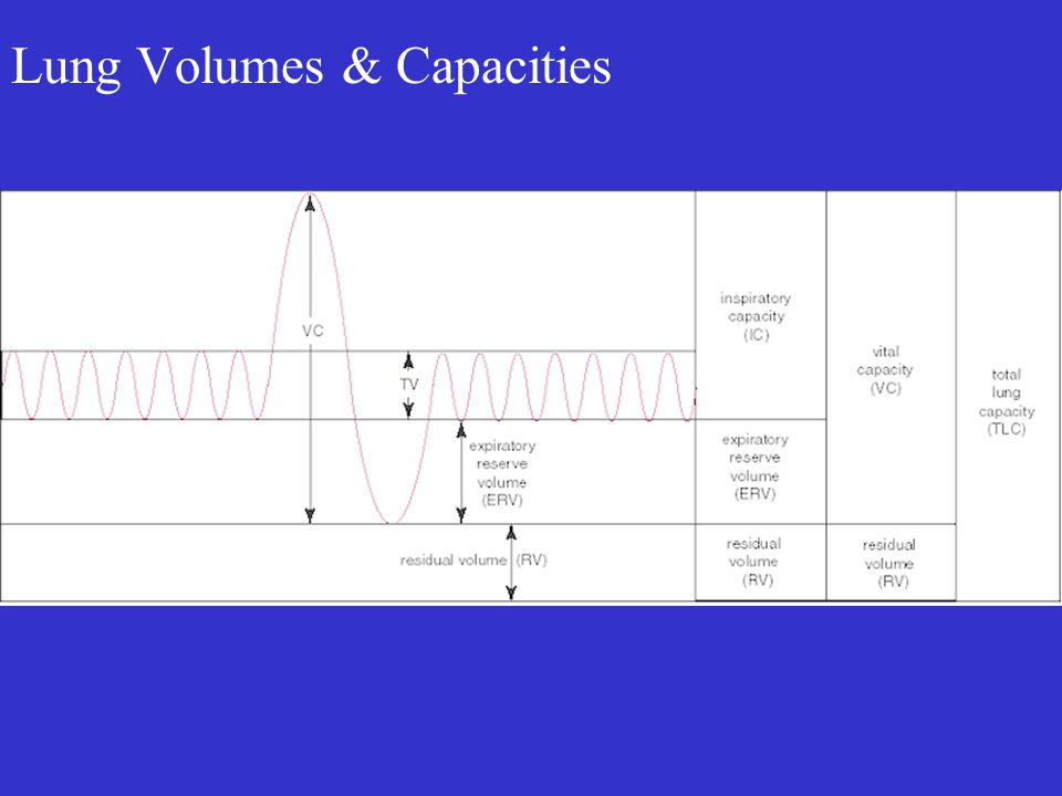 Lung Volumes & Capacities