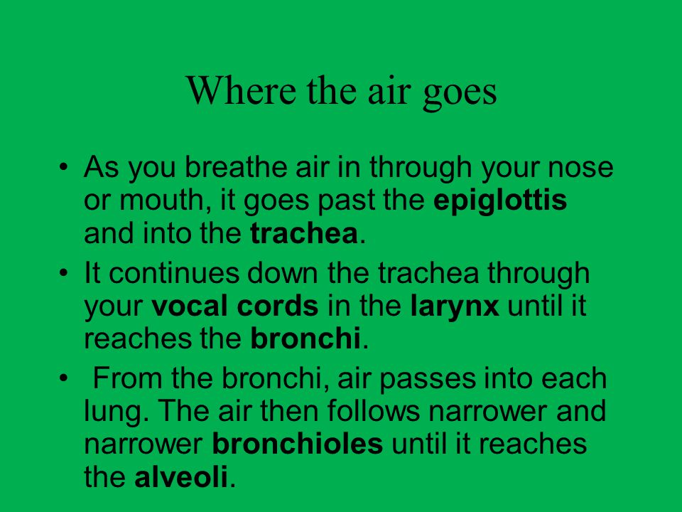 Where the air goes As you breathe air in through your nose or mouth, it goes past the epiglottis and into the trachea.