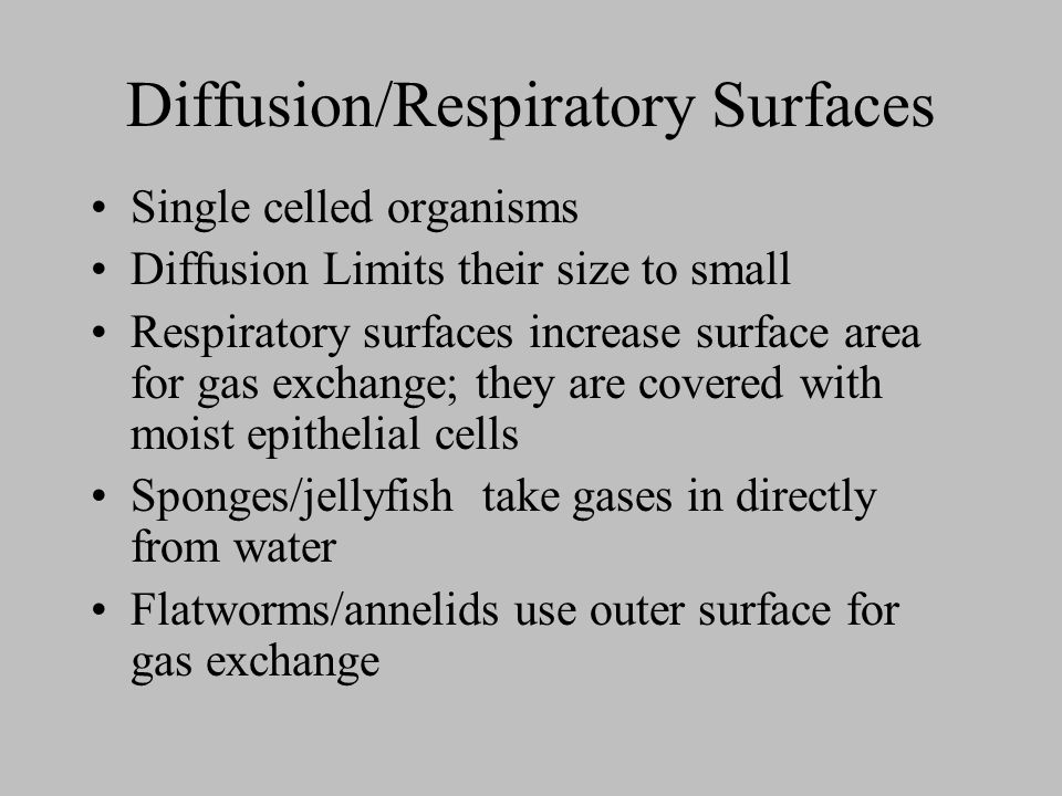 Diffusion/Respiratory Surfaces