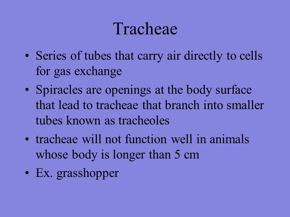 Tracheae Series of tubes that carry air directly to cells for gas exchange.