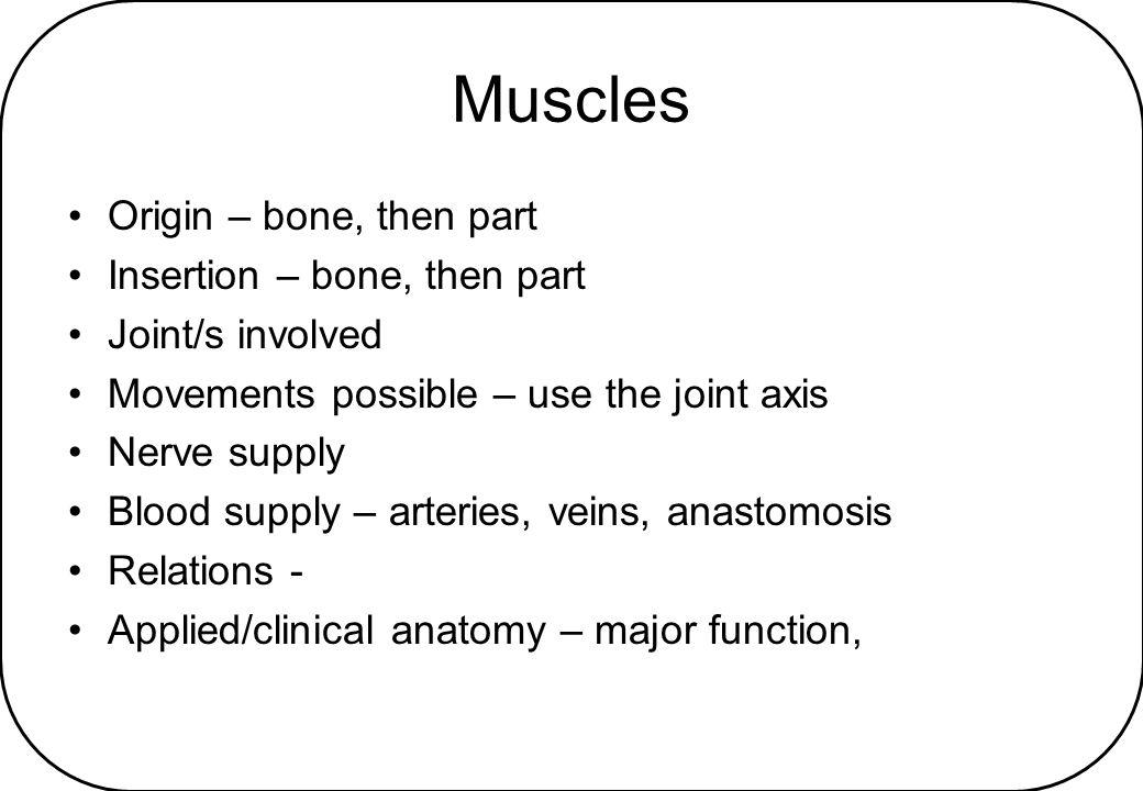 Muscles Origin – bone, then part Insertion – bone, then part