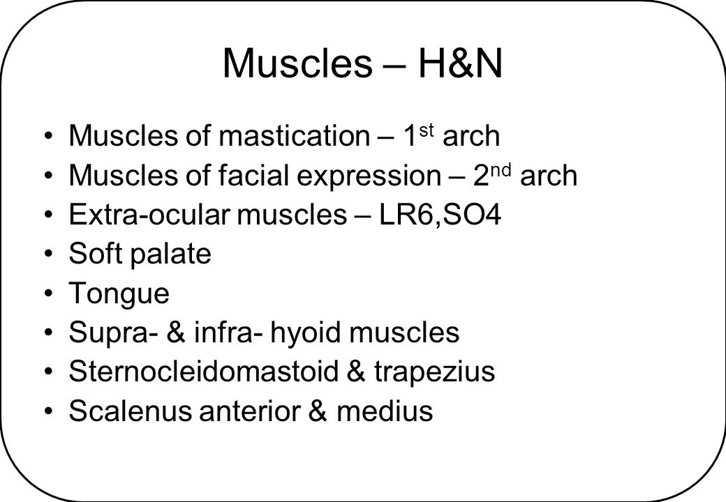 Muscles – H&N Muscles of mastication – 1st arch