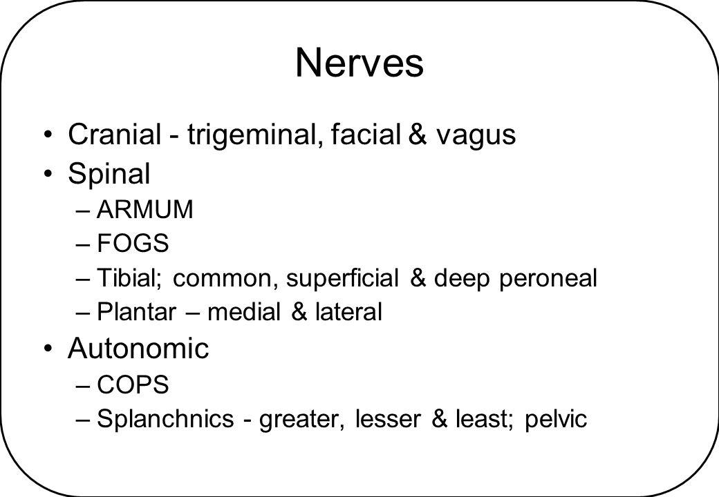 Nerves Cranial - trigeminal, facial & vagus Spinal Autonomic ARMUM