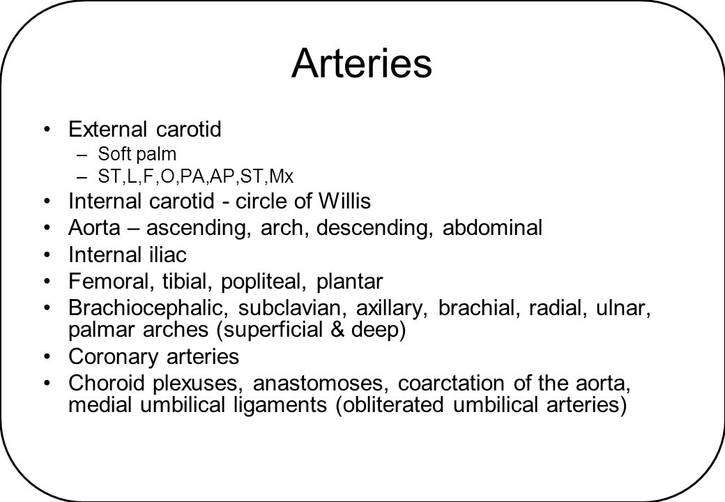 Arteries External carotid Internal carotid - circle of Willis