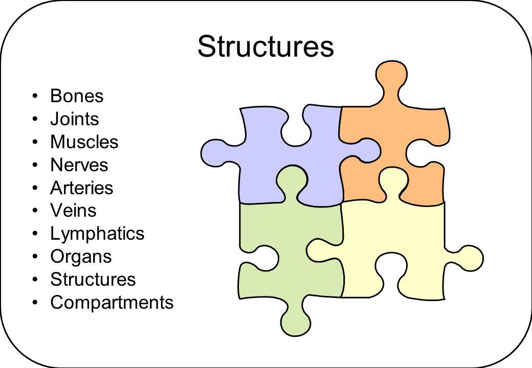 Structures Bones Joints Muscles Nerves Arteries Veins Lymphatics