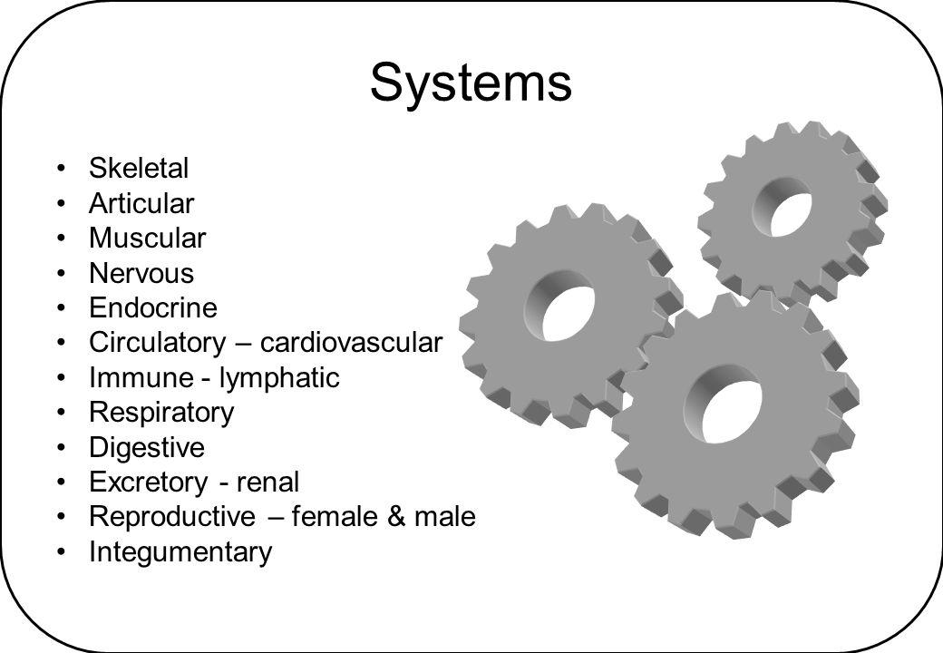 Systems Skeletal Articular Muscular Nervous Endocrine