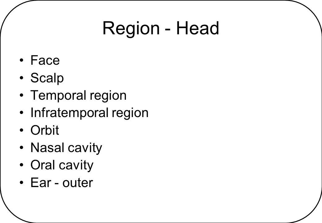 Region - Head Face Scalp Temporal region Infratemporal region Orbit