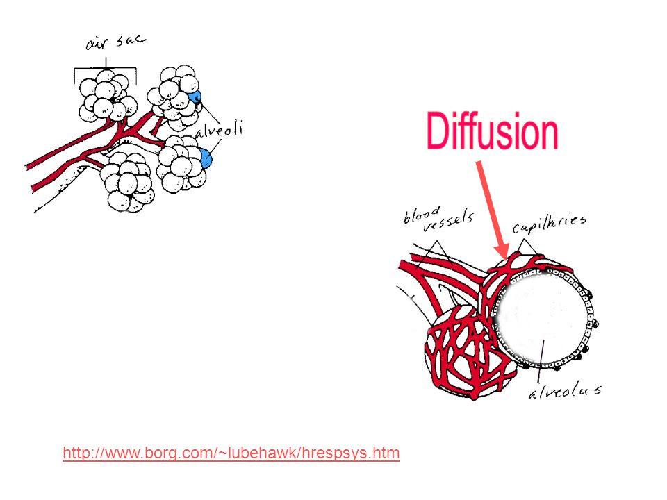 Diffusion http://www.borg.com/~lubehawk/hrespsys.htm