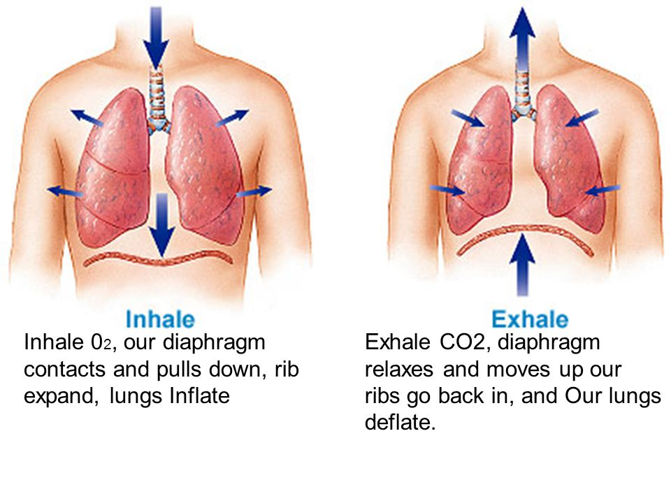 Inhale 02, our diaphragm contacts and pulls down, rib expand, lungs Inflate