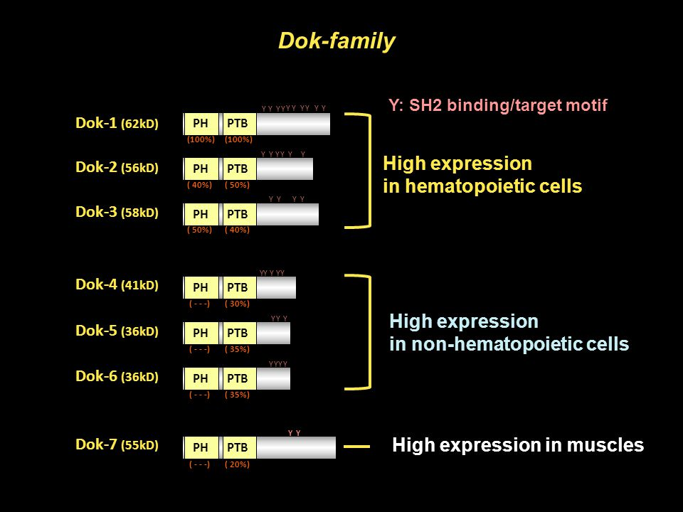Dok-family High expression in hematopoietic cells High expression