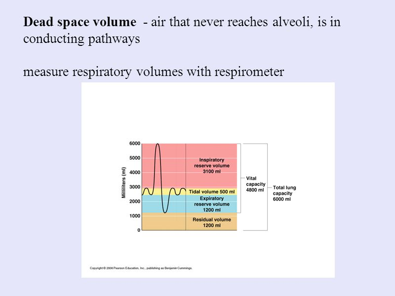Dead space volume - air that never reaches alveoli, is in conducting pathways