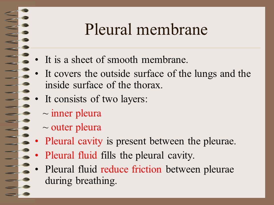 Pleural membrane It is a sheet of smooth membrane.