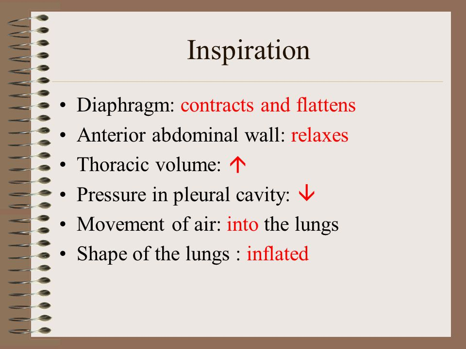 Inspiration Diaphragm: contracts and flattens
