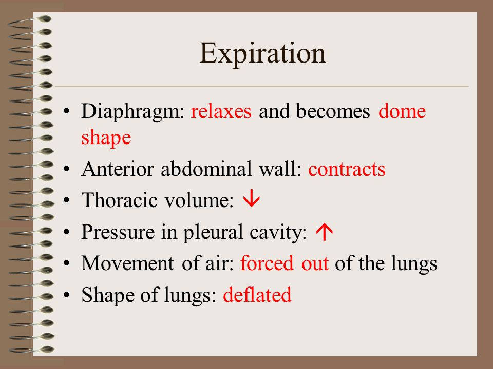 Expiration Diaphragm: relaxes and becomes dome shape