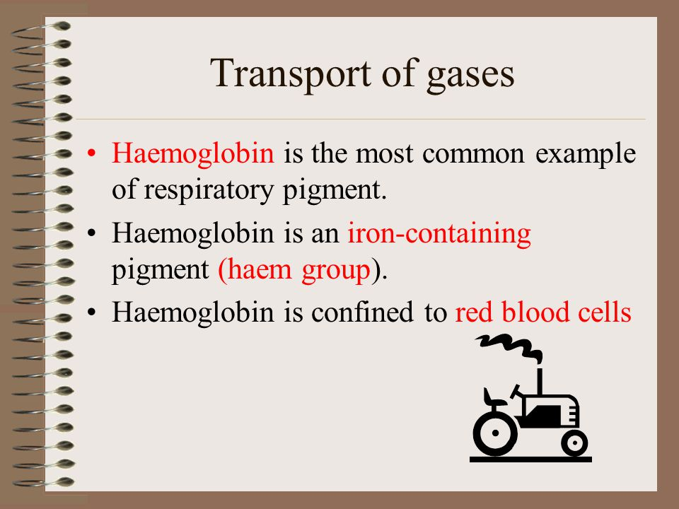 Transport of gases Haemoglobin is the most common example of respiratory pigment. Haemoglobin is an iron-containing pigment (haem group).