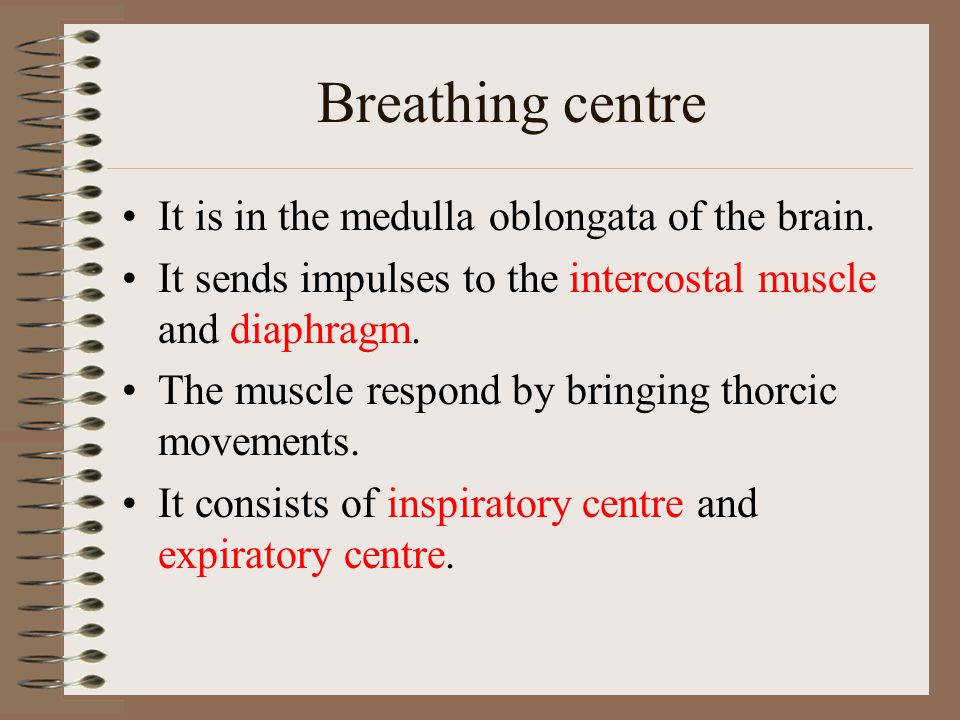 Breathing centre It is in the medulla oblongata of the brain.