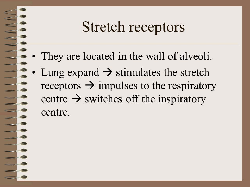 Stretch receptors They are located in the wall of alveoli.
