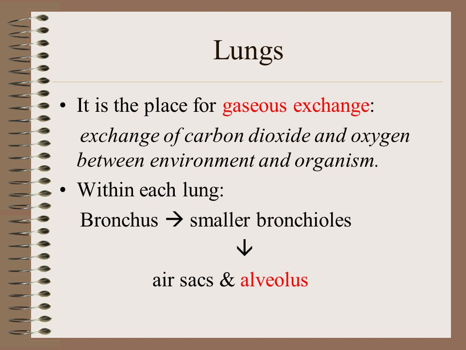 Lungs It is the place for gaseous exchange: