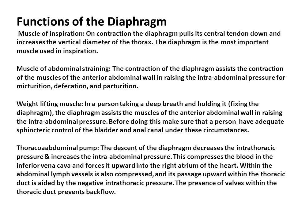 Functions of the Diaphragm