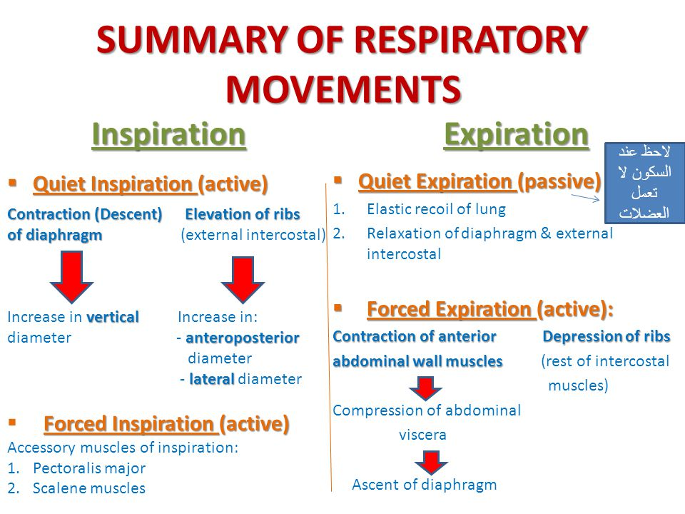 SUMMARY OF RESPIRATORY MOVEMENTS