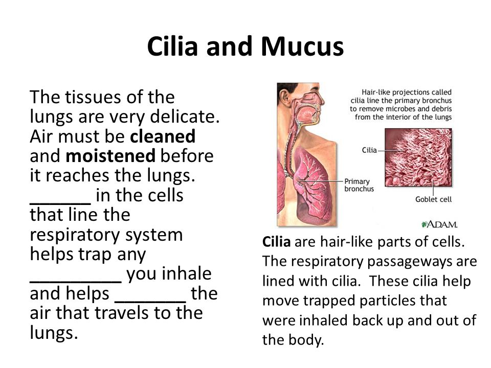 Cilia and Mucus