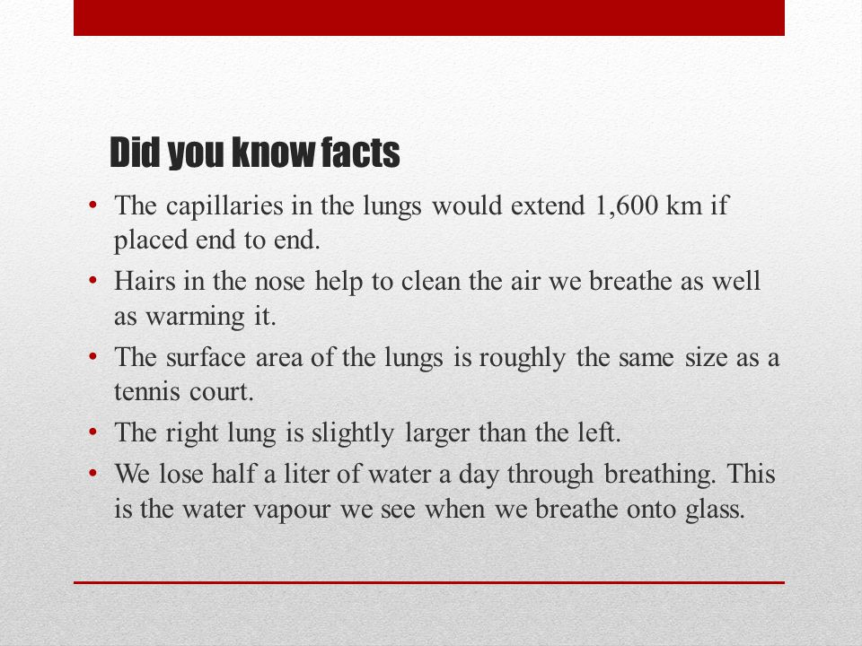 Did you know facts The capillaries in the lungs would extend 1,600 km if placed end to end.