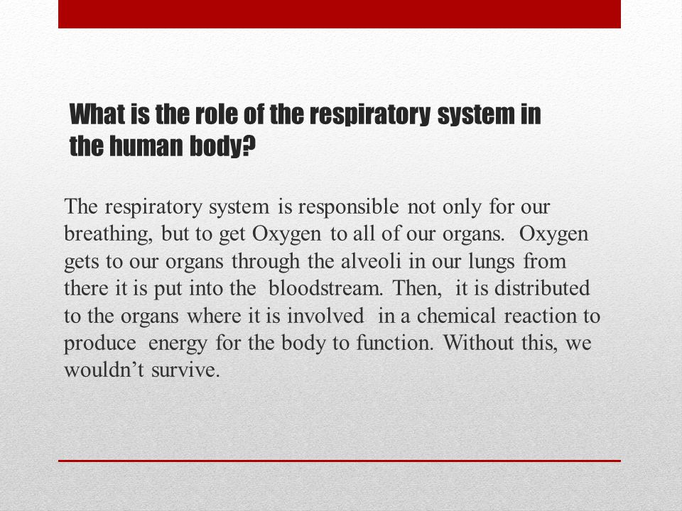 What is the role of the respiratory system in the human body