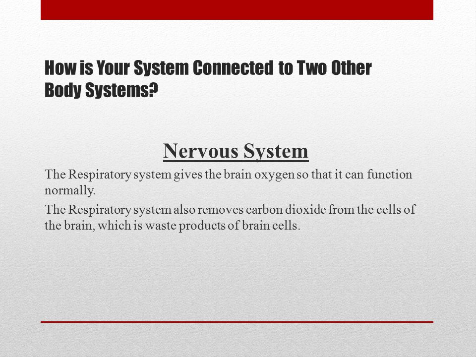 How is Your System Connected to Two Other Body Systems