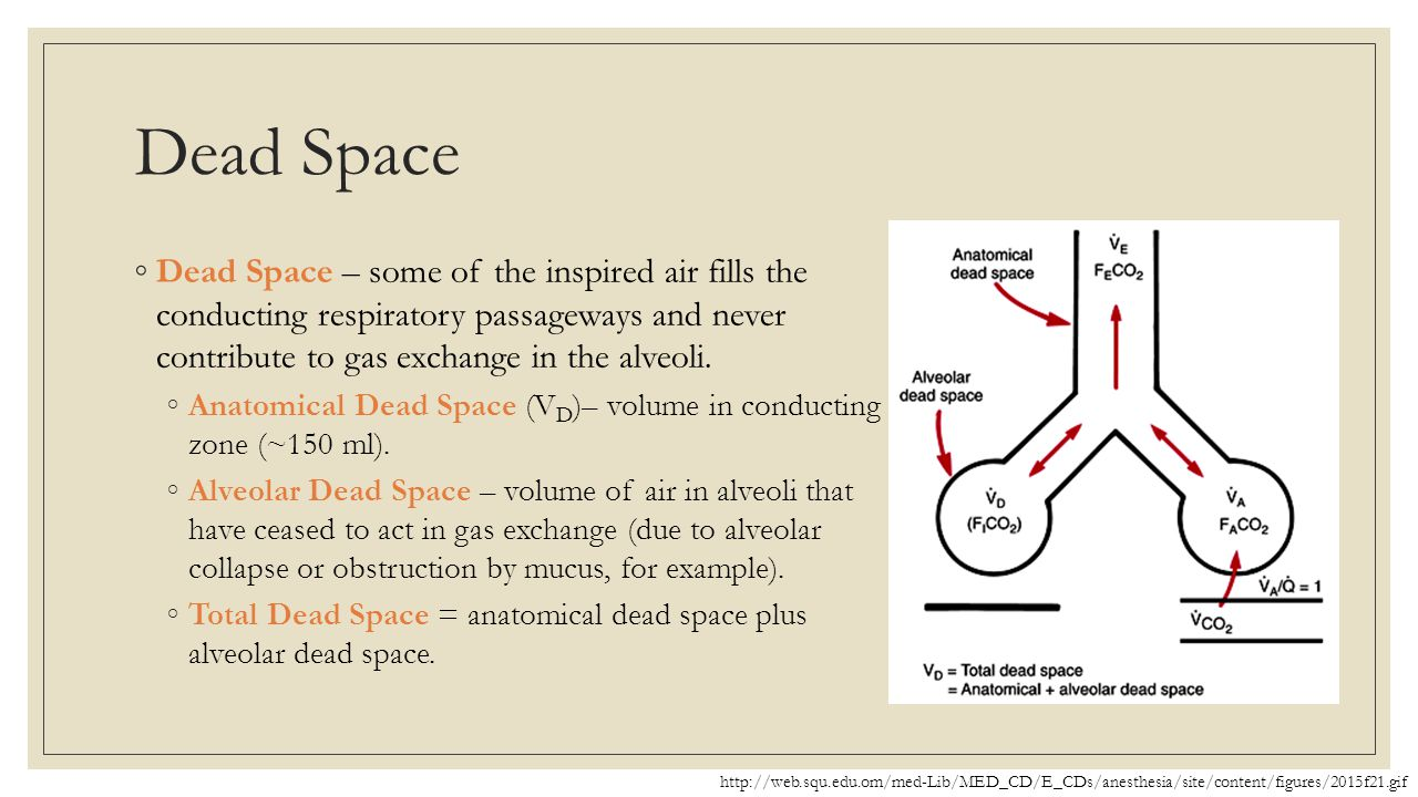 Dead Space Dead Space – some of the inspired air fills the conducting respiratory passageways and never contribute to gas exchange in the alveoli.