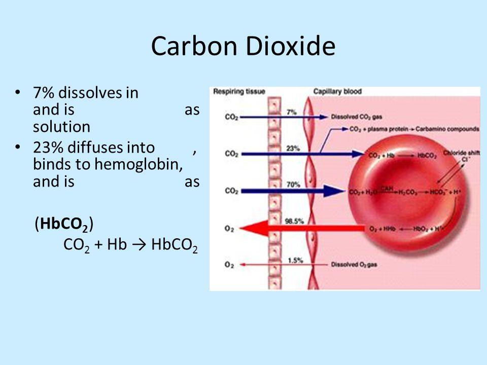 Carbon Dioxide 7% dissolves in and is as solution