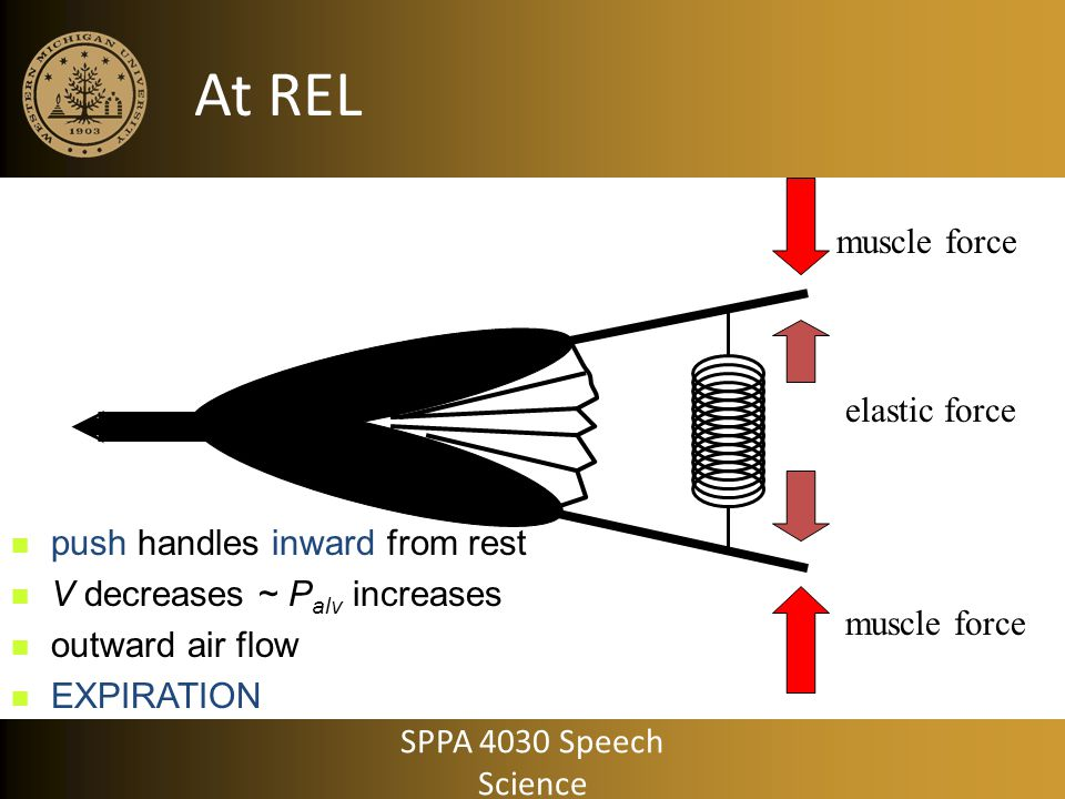 At REL muscle force elastic force push handles inward from rest
