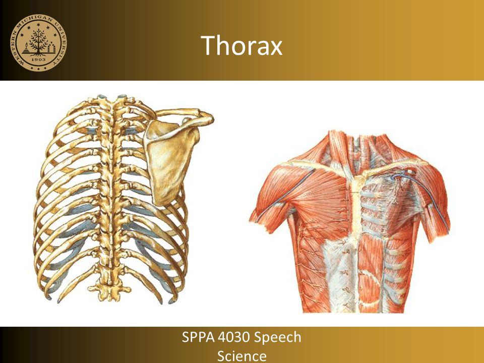 Thorax SPPA 4030 Speech Science