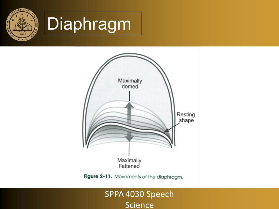Diaphragm SPPA 4030 Speech Science