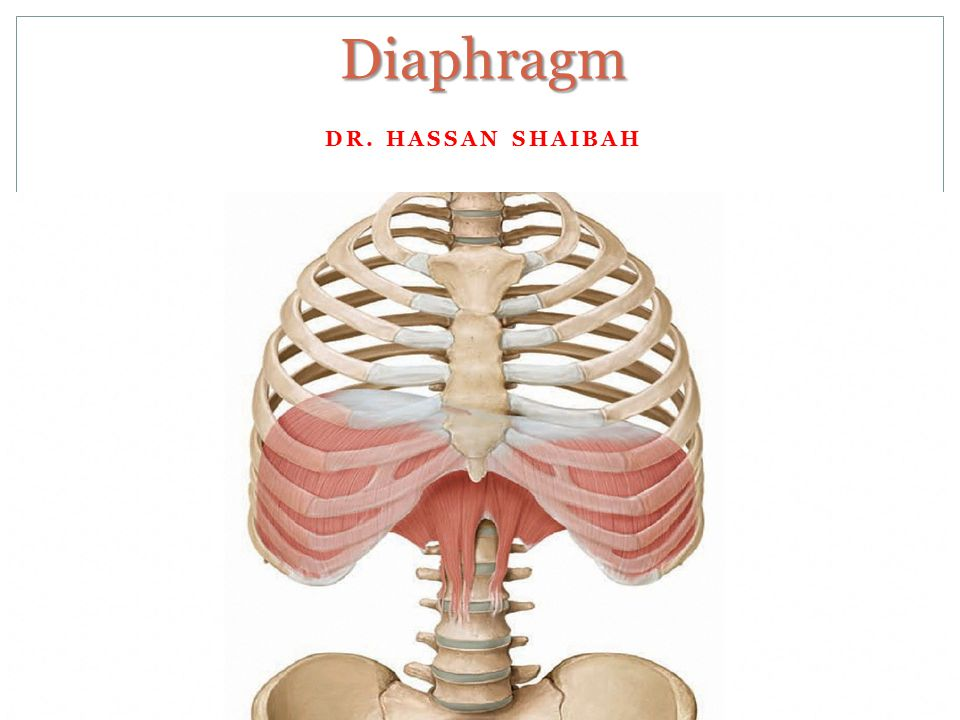 diaphragm dr. hassan shaibah. - ppt video online download, Human body