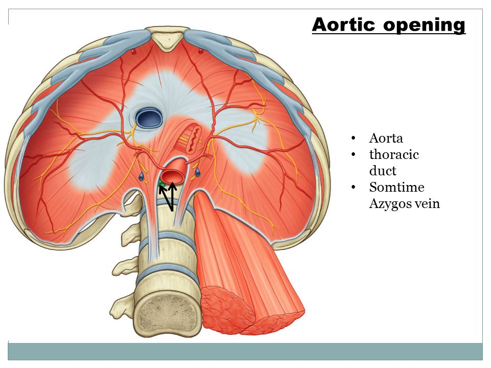 Aortic opening Aorta thoracic duct Somtime Azygos vein