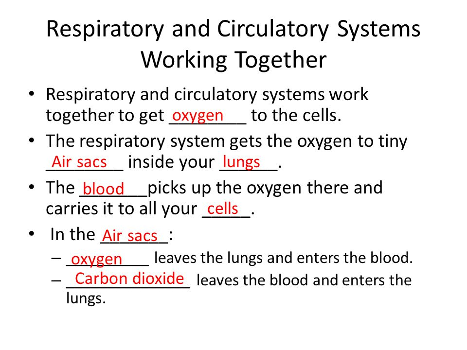 Respiratory and Circulatory Systems Working Together