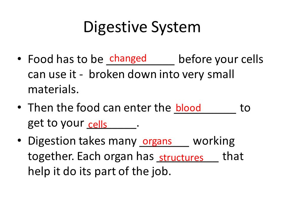 Digestive System Food has to be ___________ before your cells can use it - broken down into very small materials.