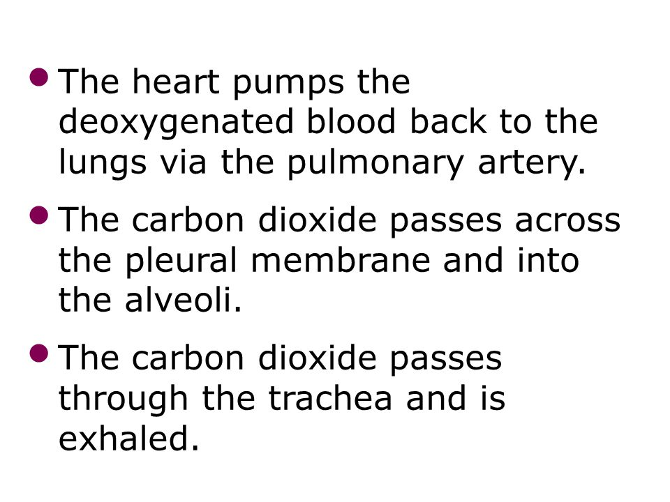 The carbon dioxide passes through the trachea and is exhaled.