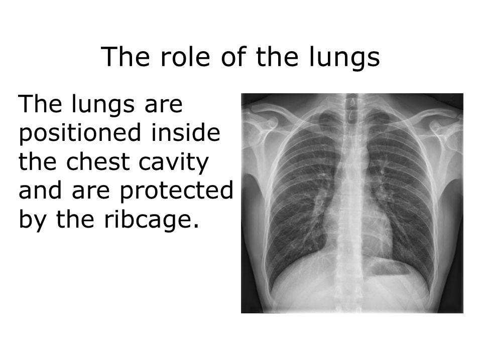 Mechanisms of breathing 28