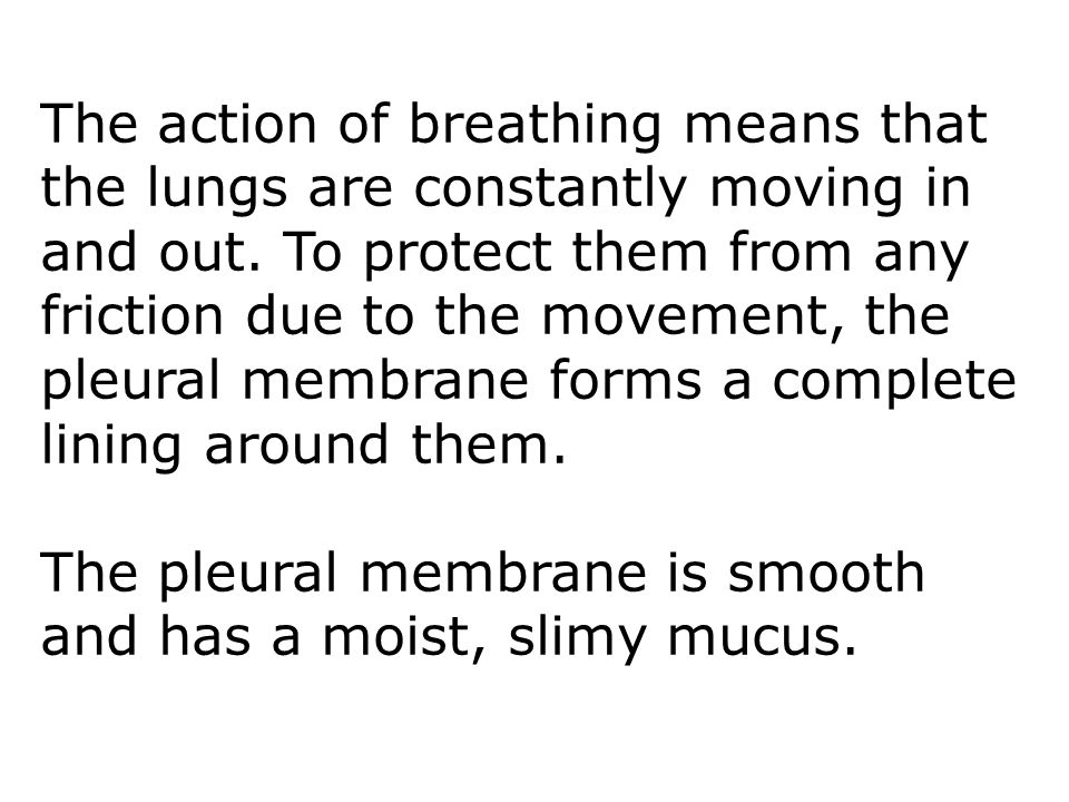 The pleural membrane is smooth and has a moist, slimy mucus.